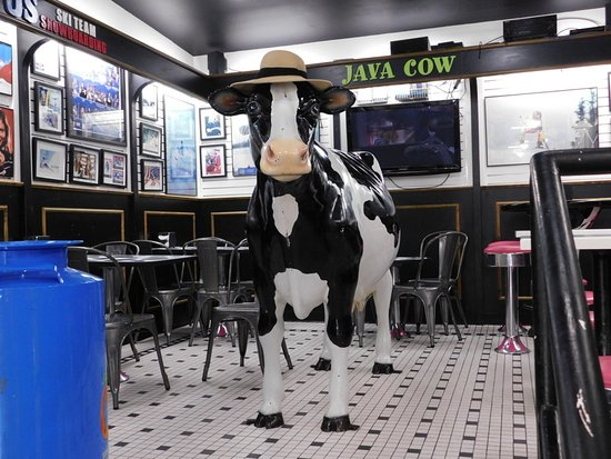 dine-with-the-cow